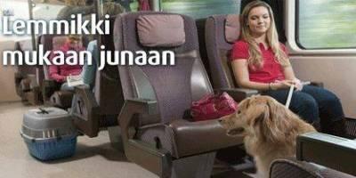 Koira junamatkustajana
