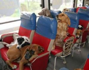 Koirat bussissa